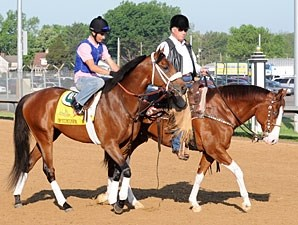Optimizer and D. Wayne Lukas - Churchill Downs 5/2/2012