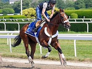 Mucho Macho Man - Belmont Park June 5, 2011.