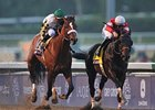 "Nov. 3 Breeders' Cup Classic received a 2.0 national rating on NBC.<br><a target=""blank"" href=""http://photos.bloodhorse.com/BreedersCup/2012-Breeders-Cup/Classic/26128658_j8xsjs#!i=2194603847&k=jVZgqdP"">Order This Photo</a>"