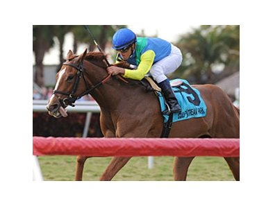 "Dayatthespa won the Sweetest Chant Stakes on Jan. 22. <br><a target=""blank"" href=""http://www.bloodhorse.com/horse-racing/photo-store?ref=http%3A%2F%2Fpictopia.com%2Fperl%2Fgal%3Fprovider_id%3D368%26ptp_photo_id%3D9803243%26ref%3Dstory"">Order This Photo</a>"