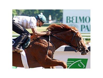 "2010 Belmont Stakes winner Drosselmeyer<br><a target=""blank"" href=""http://www.bloodhorse.com/horse-racing/photo-store?ref=http%3A%2F%2Fpictopia.com%2Fperl%2Fgal%3Fprovider_id%3D368%26ptp_photo_id%3D9047692%26ref%3Dstory"">Order This Photo</a>"