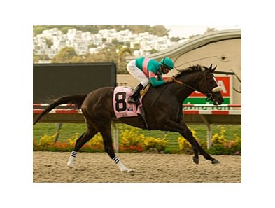 "Zenyatta winning the 2008 Clement L. Hirsch Handicap.<br><a target=""blank"" href=""http://www.bloodhorse.com/horse-racing/photo-store?ref=http%3A%2F%2Fpictopia.com%2Fperl%2Fgal%3Fprovider_id%3D368%26ptp_photo_id%3D5371640%26ref%3Dstory"">Order This Photo</a>"