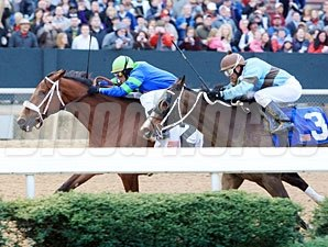 Absinthe Minded wins the 2012 Pippin Stakes.
