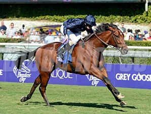 George Vancouver wins the 2012 Breeders' Cup Juvenile Turf.