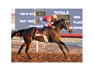 Peppers Pride will try for win number 19 in the New Mexico State Racing Commission Handicap at Sunland Park.