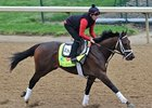 "Palace Malice<br><a target=""blank"" href=""http://photos.bloodhorse.com/TripleCrown/2013-Triple-Crown/Kentucky-Derby-Workouts/29026796_jvcnn8#!i=2484487461&k=H9jwJH2"">Order This Photo</a>"