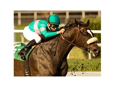 "Zenyatta won 8 races at Hollywood Park, including the 2010 Lady's Secret.<br><a target=""blank"" href=""http://www.bloodhorse.com/horse-racing/photo-store?ref=http%3A%2F%2Fpictopia.com%2Fperl%2Fgal%3Fprovider_id%3D368%26ptp_photo_id%3D9217806%26ref%3Dstory"">Order This Photo</a>"