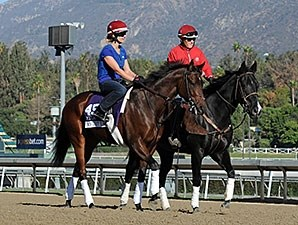 No Jet Lag - 2013 Breeders' Cup, October 29, 2013.