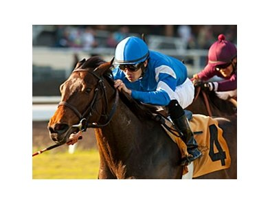 Better Lucky won the 2012 Matriarch Stakes.