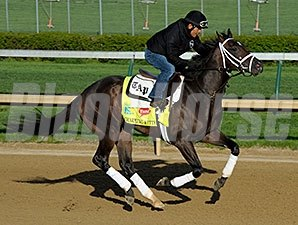 Charming Kitten works at Churchill Downs 4/21/2013.