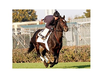 Court Vision working towards the Breeders' Cup.