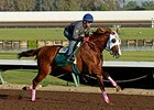 California Chrome Digs In for Final BC Breeze