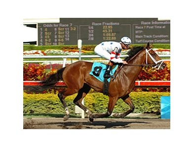 "Big Brown was the easiest of winners in his allowance race March 5.<br><a target=""blank"" href=""http://www.bloodhorse.com/horse-racing/photo-store?ref=http%3A%2F%2Fpictopia.com%2Fperl%2Fgal%3Fprovider_id%3D368%26ptp_photo_id%3D3810291%26ref%3Dstory"">Order This Photo</a>"