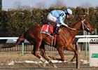 "3-year old Haynesfield is one of the stars in the Empire Classic.<br><a target=""blank"" href=""http://www.bloodhorse.com/horse-racing/photo-store?ref=http%3A%2F%2Fpictopia.com%2Fperl%2Fgal%3Fprovider_id%3D368%26ptp_photo_id%3D7683569%26ref%3Dstory"">Order This Photo</a>"