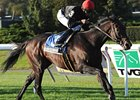 "Boisterous won the Knickerbocker Stakes in 2011 and 2012 (shown).<br><a target=""blank"" href=""http://photos.bloodhorse.com/AtTheRaces-1/at-the-races-2012/22274956_jFd5jM#!i=2147306952&k=BxH84pm"">Order This Photo</a>"
