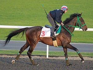 Dick S Pick S For Dubai World Cup Bloodhorse