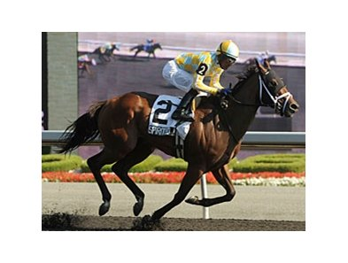 Spirit Miss finishes strong to win the Duchess Stakes at Woodbine.