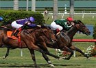 "Sporting Art gets his first U.S. win in the Bulleit Bourbon Palm Beach.<br><a target=""blank"" href=""http://www.bloodhorse.com/horse-racing/photo-store?ref=http%3A%2F%2Fpictopia.com%2Fperl%2Fgal%3Fprovider_id%3D368%26ptp_photo_id%3D4008355%26ref%3Dstory"">Order This Photo</a>"