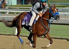 "Almudena<br><a target=""blank"" href=""http://photos.bloodhorse.com/BreedersCup/2012-Breeders-Cup/Works/26130247_gxH6nS#!i=2187190620&k=sh5K3XW"">Order This Photo</a>"