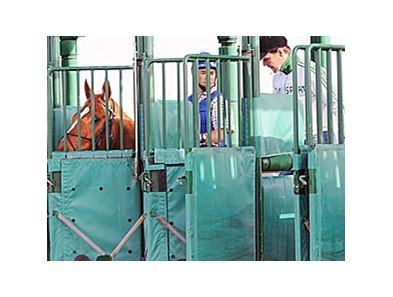 Curlin gets a feel for the Nad Al Sheba starting stalls on Feb. 26, 2008.
