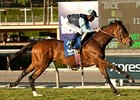Rhythm of Light Speeds Home in Goldikova