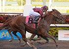 "Florida Derby winner Ice Box is training well for the Belmont.<br><a target=""blank"" href=""http://www.bloodhorse.com/horse-racing/photo-store?ref=http%3A%2F%2Fpictopia.com%2Fperl%2Fgal%3Fprovider_id%3D368%26ptp_photo_id%3D8849906%26ref%3Dstory"">Order This Photo</a>"