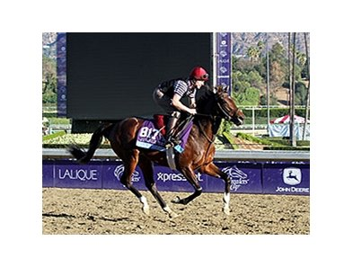 "Wilshire Boulevard <br><a target=""blank"" href=""http://photos.bloodhorse.com/BreedersCup/2013-Breeders-Cup/Breeders-Cup/32986083_QMHXWK#!i=2874006843&k=kQFKJMN"">Order This Photo</a>"