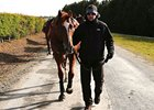 Daddy Long Legs at Ballydoyle 4/29/2012.