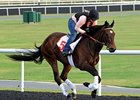 Royal Delta prepping for the Dubai World Cup.