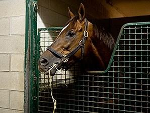 Suntracer Horse Profile Bloodhorse