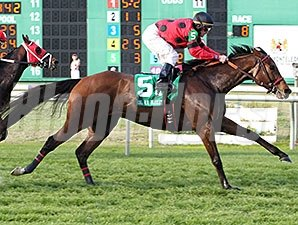 String King wins the 2015 Colonel E. R. Bradley Handicap.