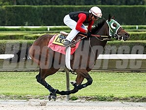 Scandalous Act works at Calder Race Course on 10/25/2013.