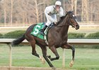 Rachel Alexandra opens at 6-1 in the March 12-15 Kentucky Oaks Future Wager.