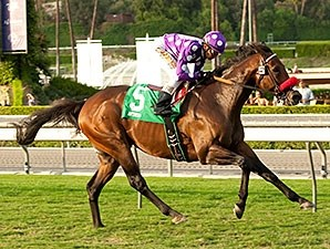 Pure Tactics wins the Lure Stakes.