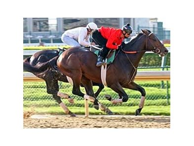 Z Humor works four furlongs April 17 at Churchill Downs.