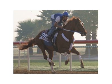 Curlin continues to train very well for his next start, in the Dubai World Cup (UAE-I) March 29.