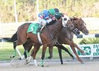 Odysseus (right) gets his nose in front of Schoolyard Dreams (#5, left) to win the Tampa Bay Derby.