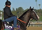 "Bahamian Squall<br><a target=""blank"" href=""http://photos.bloodhorse.com/BreedersCup/2013-Breeders-Cup/Breeders-Cup/32986083_QMHXWK#!i=2872143890&k=Fnq8cn6"">Order This Photo</a>"