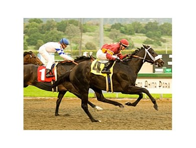 "Georgie Boy, a three-time graded stakes winner, has resumed training.<br><a target=""blank"" href=""http://www.bloodhorse.com/horse-racing/photo-store?ref=http%3A%2F%2Fpictopia.com%2Fperl%2Fgal%3Fprovider_id%3D368%26ptp_photo_id%3D3884285%26ref%3Dstory"">Order This Photo</a>"