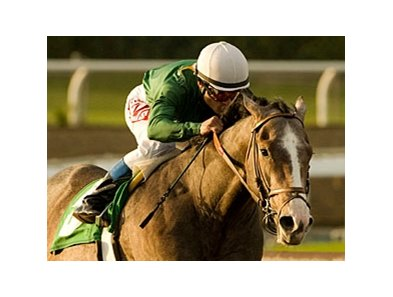 "The Pamplemousse<br><a target=""blank"" href=""http://www.bloodhorse.com/horse-racing/photo-store?ref=http%3A%2F%2Fpictopia.com%2Fperl%2Fgal%3Fprovider_id%3D368%26ptp_photo_id%3D7833329%26ref%3Dstory"">Order This Photo</a>"