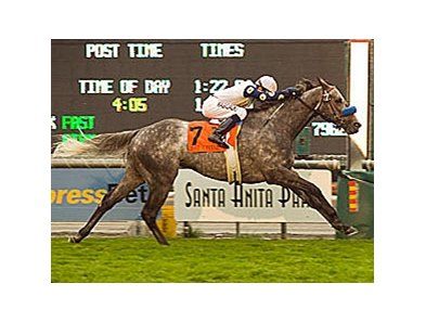 "Ever a Friend, winner of the Frank E. Kilroe Mile Handicap (gr. IT) at Santa Anita Park March 1 <br><a target=""blank"" href=""http://www.bloodhorse.com/horse-racing/photo-store?ref=http%3A%2F%2Fpictopia.com%2Fperl%2Fgal%3Fprovider_id%3D368%26ptp_photo_id%3D3724260%26ref%3Dstory"">Order This Photo</a>"