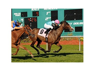 Denomination faces 7 in the Violet Stakes at Monmouth.