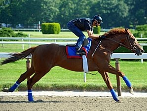Animal Kingdom at Belmont on June 6, 2011.