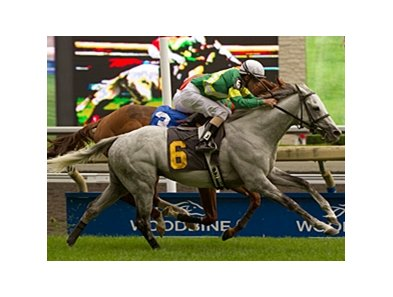 Musketier won the Singspiel Stakes at Woodbine on June 24.