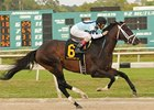 Verrazano in the Tampa Bay Derby.