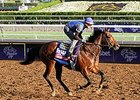 "Secret Circle <br><a target=""blank"" href=""http://photos.bloodhorse.com/BreedersCup/2014-Breeders-Cup/Works/i-JHk24js"">Order This Photo</a>"