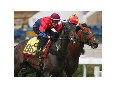 Viva Pataca was named Hong Kong's champion middle-distance and champion stayer for 2008.