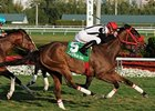 Gulfstream Park winner Teaks North takes on a full field in the Tampa Bay Stakes.