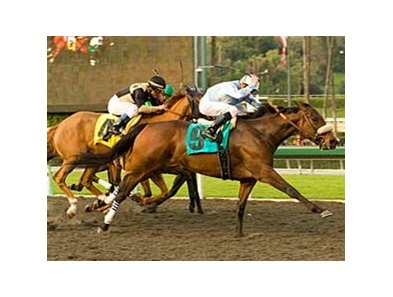 "Life is Sweet reaches for the finish in the La Canada Stakes at Santa Anita. <br><a target=""blank"" href=""http://www.bloodhorse.com/horse-racing/photo-store?ref=http%3A%2F%2Fgallery.pictopia.com%2Fbloodhorse%2Fgallery%2F69713%2Fphoto%2F7756080%2F%3Fo%3D0"">Order This Photo</a>"