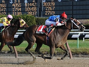 C C's Pal wins the 2011 Garland of Roses.